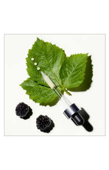 Blackberry Leaf and Pipette
