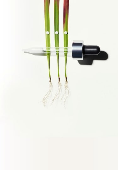 ApotheCARE Essentials™ - Hydration Products - Pipette with Japanese Blood Grass Root