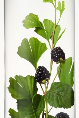 Blackberries & Blackberry Leaf in Beaker