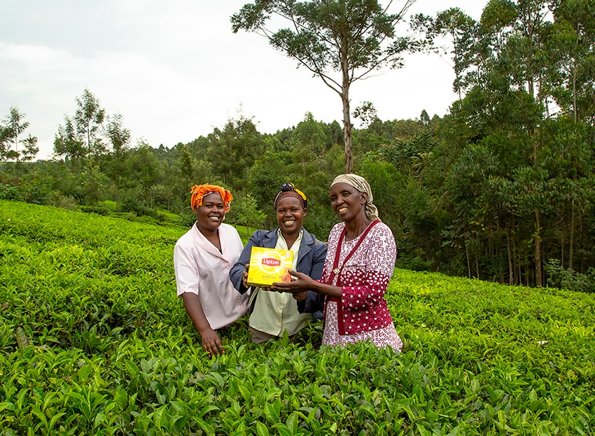 Women in Field with Lipton